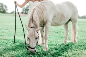 Horse Care 101 - All About Horse Care which a Beginner Should Know