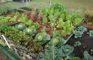 Protect Your Vegetable Garden from Critters