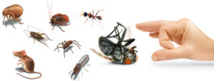 Cockroach and Rodent Control Services