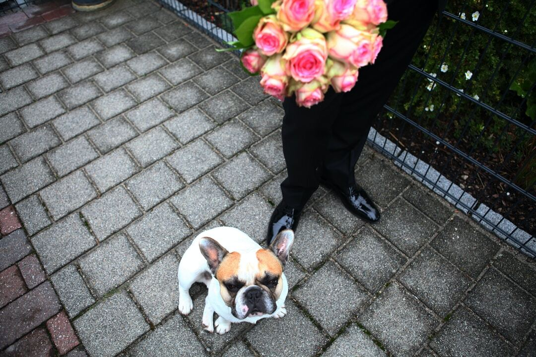 Involve Your Dog in Your Wedding Day